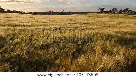 Sunshine On The Harvest