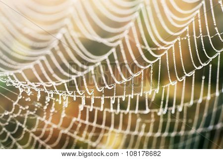 Spider web with colorful nature background. Soft focus.