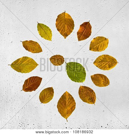 Clock stacked with colorful autumn beech leaves on the wet glass.