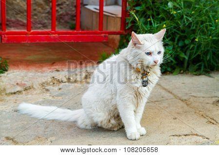 Portrait of street cat