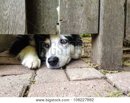 Pup Under The Fence