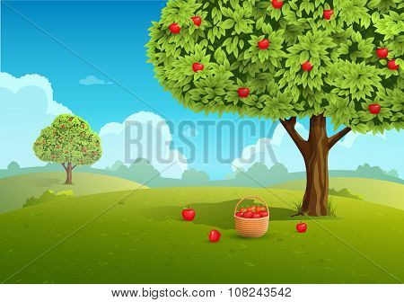 Apple orchard illustration