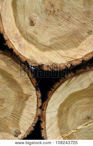 Freshly Chopped Ash Tree Logs Closeup