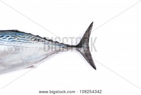 Tale of raw fish, bonito, isolated on white