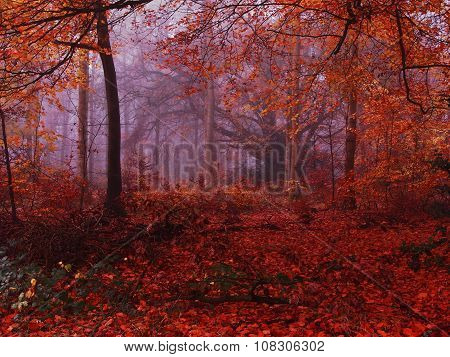 Golden Autumn Misty Forest