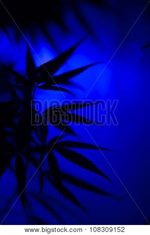 Marijuana Cannabis Abstract Background