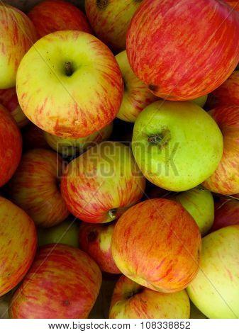Pile of freshly picked apples