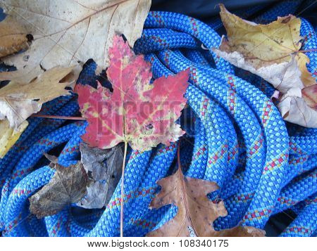 blue rock climbing rope with fall leaves