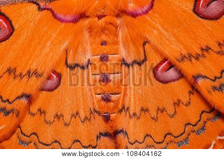 Texture Of Orange Sikkim Silk Moth