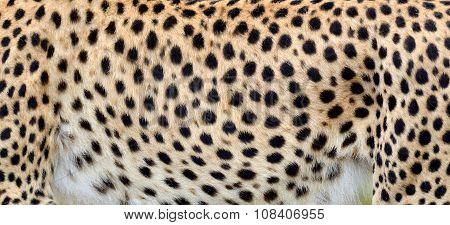 Close-up Skin Of A Cheetah