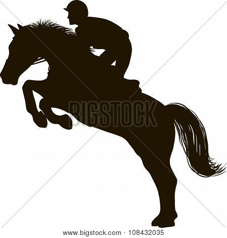 Rider on the  horse