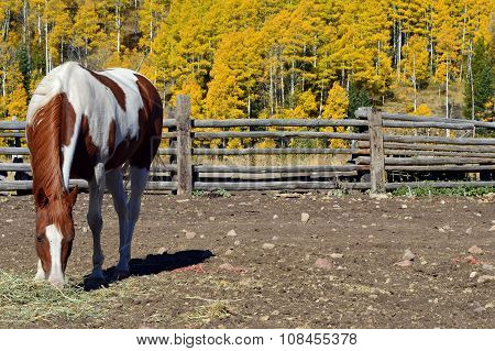 Paint Horse in autumn