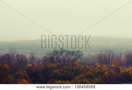 Autumn Depressive Forest Landscape