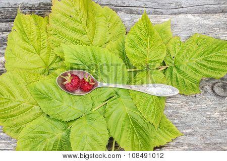 Fresh Raspberry Lies In Cupronickel Spoon On Green Leaves