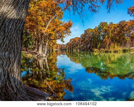 High Resolution Panoramic View Of Giant Cypress Trees With Beautiful Fall Foliage on the Frio River