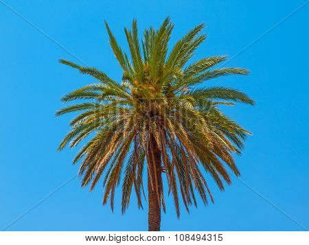 Palm tree on a blue sky background