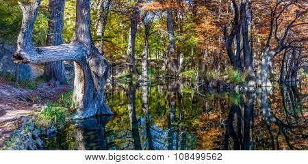 High Resolution Shot of Brilliant Fall Leaves on Bald Cypress Trees in Texas
