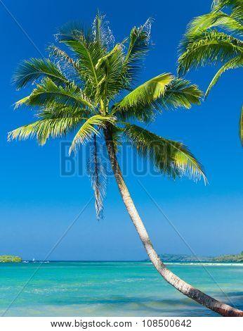 Jungle Lagoon Exotic Paradise  poster