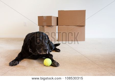 Dog On Moving Day