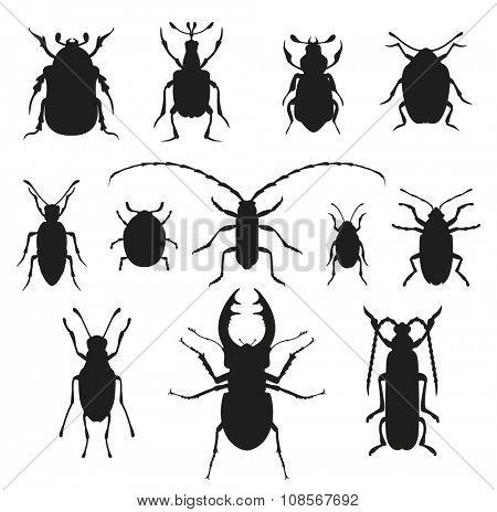 Colorful insects vector black and white collection. Insects biology natural isolated on white background. Insects isolated illustration. Insects vector icons. Fly insects micro view vector. Bugs