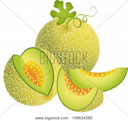 Scalable vectorial image representing a juicy cantaloupe melon, isolated on white. poster