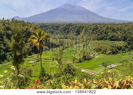 Rice Terraces With Mount Agung In Background, Bali,  Indonesia