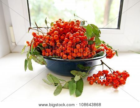 Bowl With Ashberries