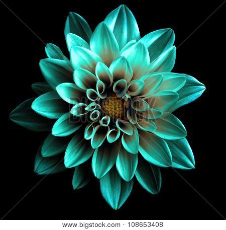 Surreal Dark Chrome Turquoise Flower Dahlia Macro Isolated On Black