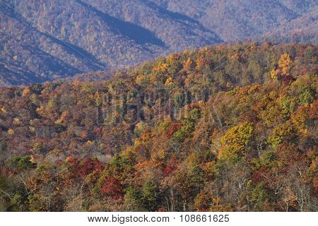 Colorful, Scenic Appalachian Mountain Forest