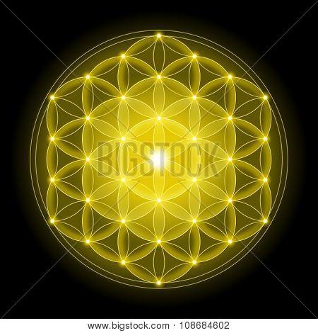 Golden Flower of Life on Black Background