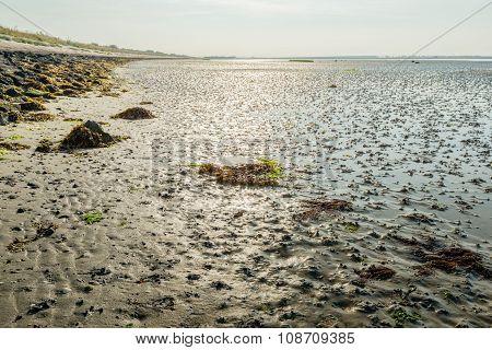Mudflats Of A Dutch Estuary At Low Tide