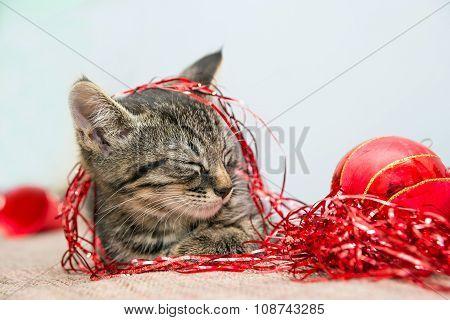 Grey small Christmas kitten sleeping