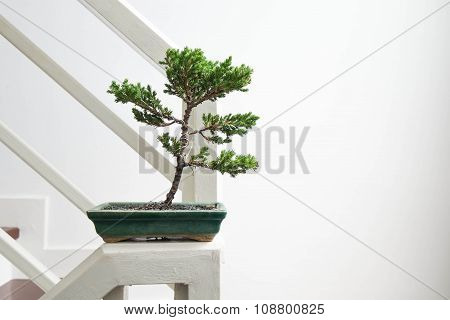Close-up Bonsai tree, interior decoration