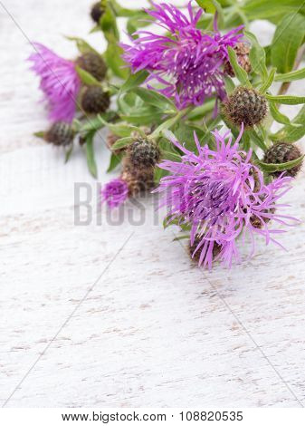 Greater Knapweed Bouquet On The White Painted Board