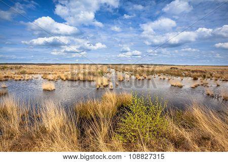 Raised Bogs Swamp Landscape