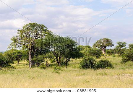 The Savannah In The Tarangire Park, Tanzania
