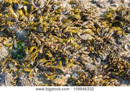 Washed Ashore At The North Sea Coast