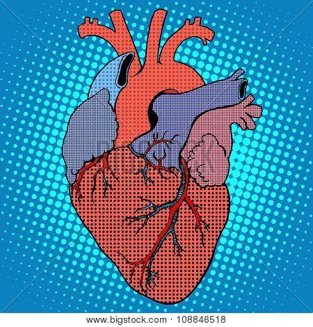 Anatomy human heart retro style