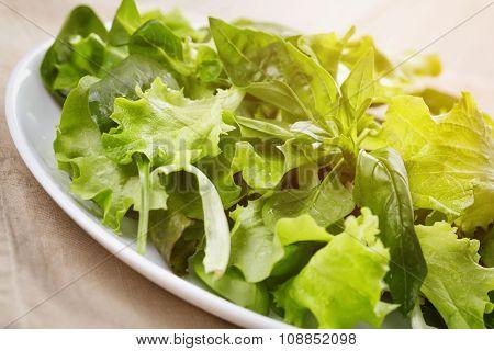 green mix salad close up