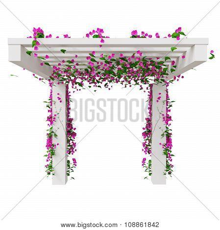 Climbing flowers on pergola