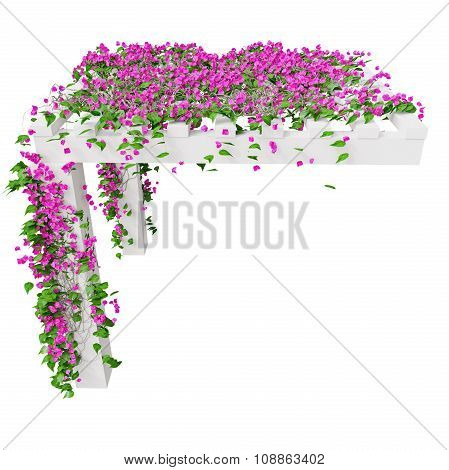 Bougainvillea with pink flowers