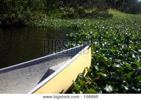 Canoe Encountering Water Vegetation