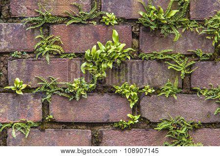 Maidenhair Spleenwort And Hart's-tongue Fern