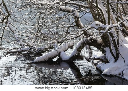 Winter At A Lake