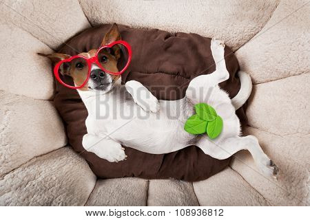 Dog Sleeping Or Resting