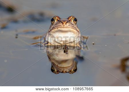Funny Frog Head Frontal View