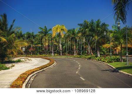 Nice Asfalt Road With Palm Trees Against The Blue Sky