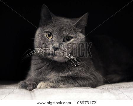 Cat's-eye.