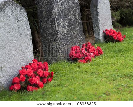 Red Roses On Graveyard