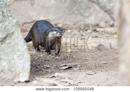 Walking Of The Otter